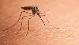 Nyugat-nílusi vírussal fertőződött meg egy Galac megyei férfi
