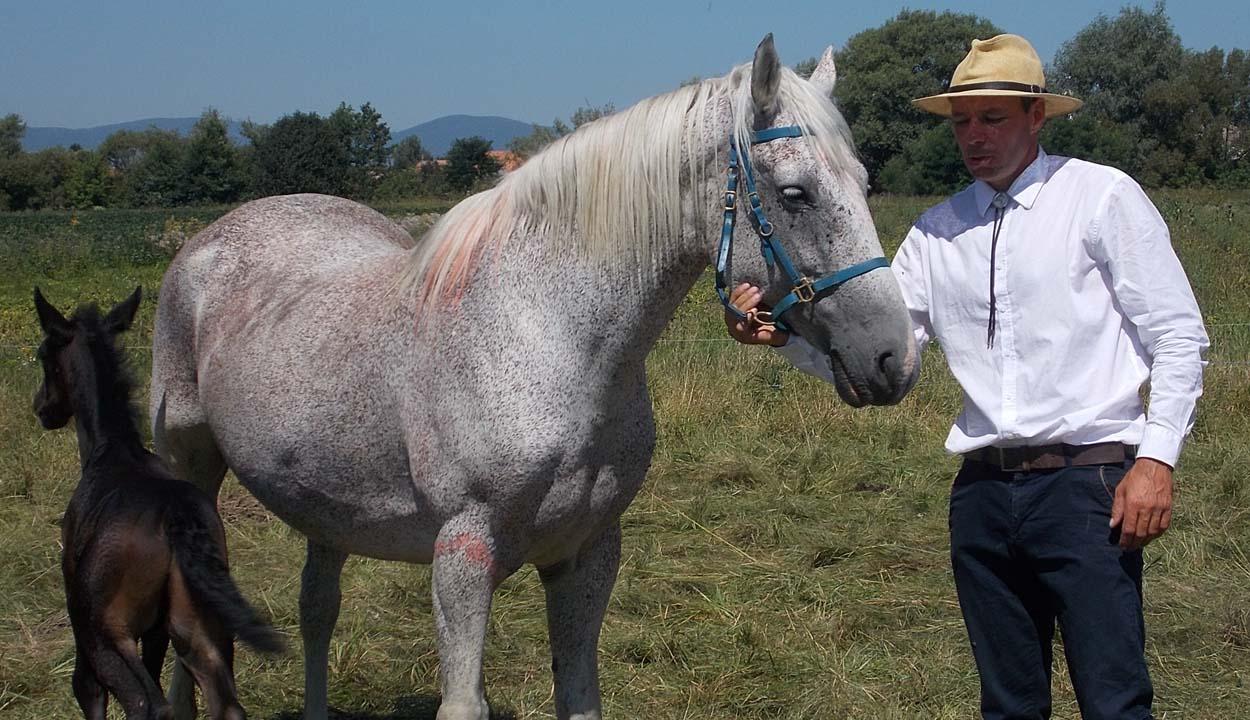 Verőfényes lovasnapok