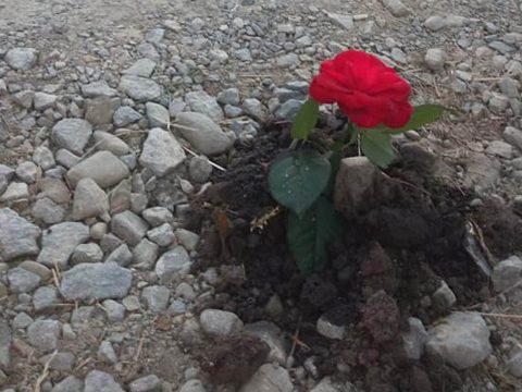Virágot ültettek az útra