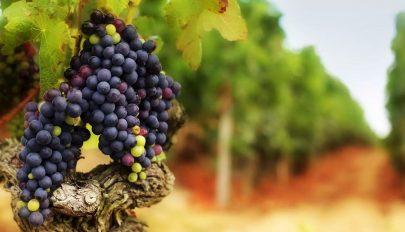 Már a borok is jelzik a klímaváltozást