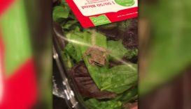 Élő békát találtak az előrecsomagolt salátában