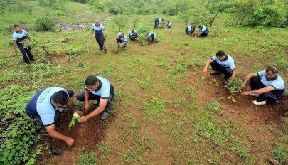 Egy nap alatt 220 millió fát ültettek Indiában