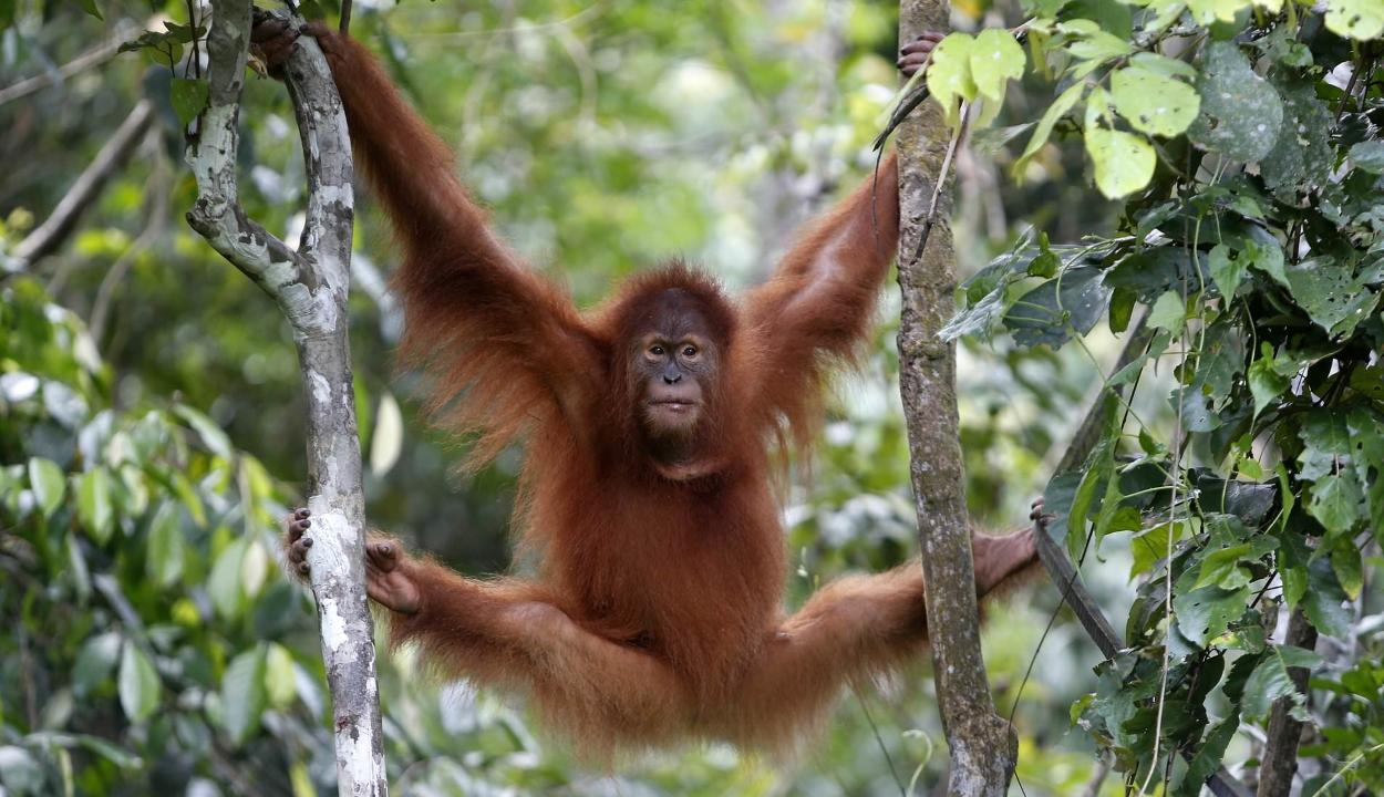 Felére csökkentek az erdőben élő gerincesek populációi 50 év alatt