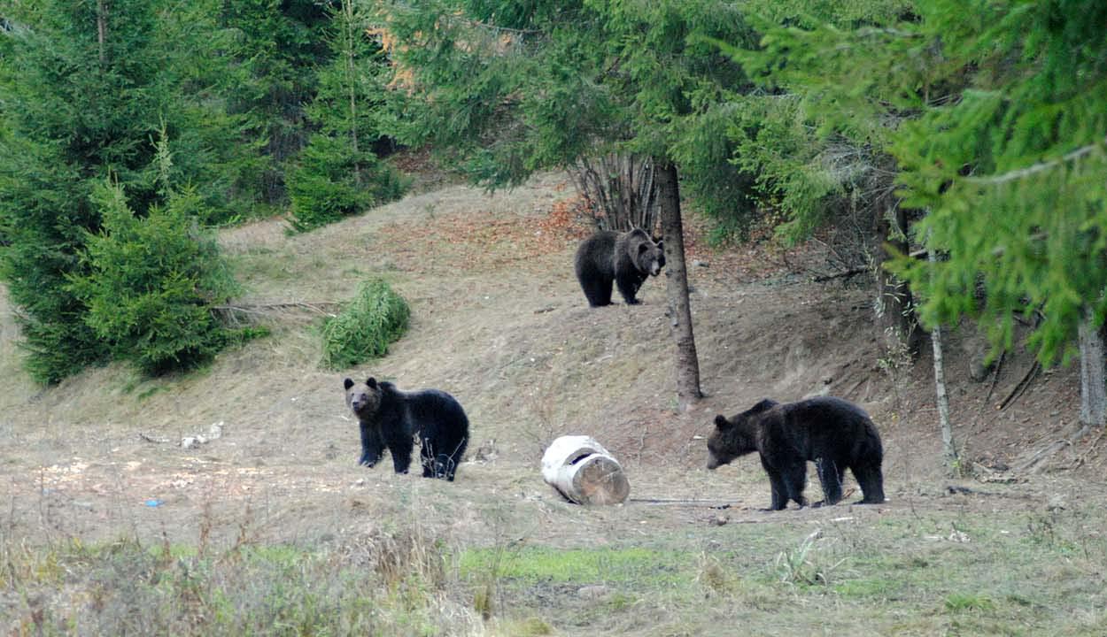 Áttörés medveügyben, RMDSZ-es javaslatra
