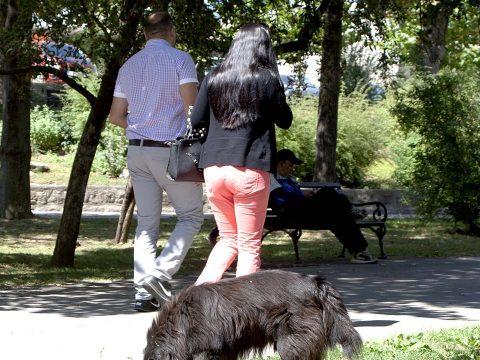 Szépmezőn 162 kutya vár gazdára