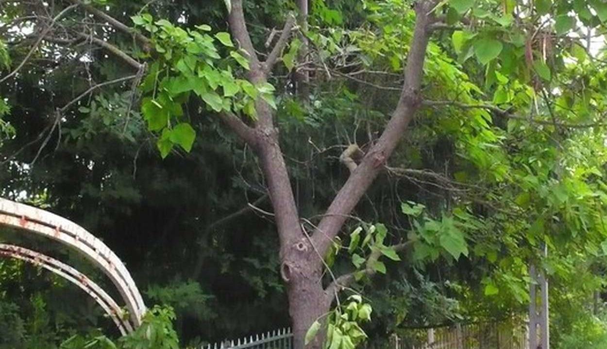 Ötvenezer fát ültetne az UEFA Budapesten