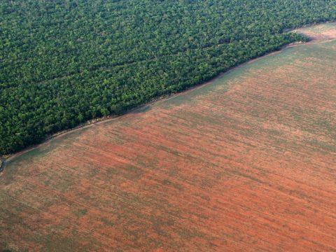 Kétszer annyi esőerdő pusztult el Brazíliában, mint tavaly