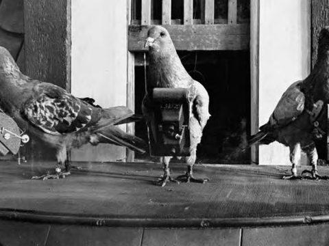 Kémkedésre használt állatokat a CIA
