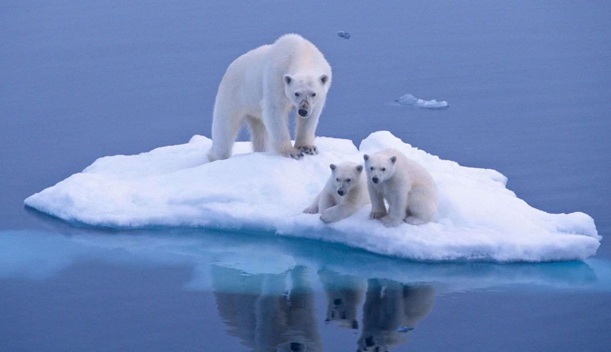 Soha még ilyen gyorsan nem melegedtek a tengerek és nem olvadt a jég a Földön