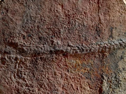Félmilliárd éves állatfajt fedeztek fel Kínában