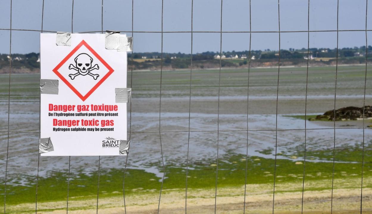 Másodpercek alatt öl a mérgező alga a francia partokon
