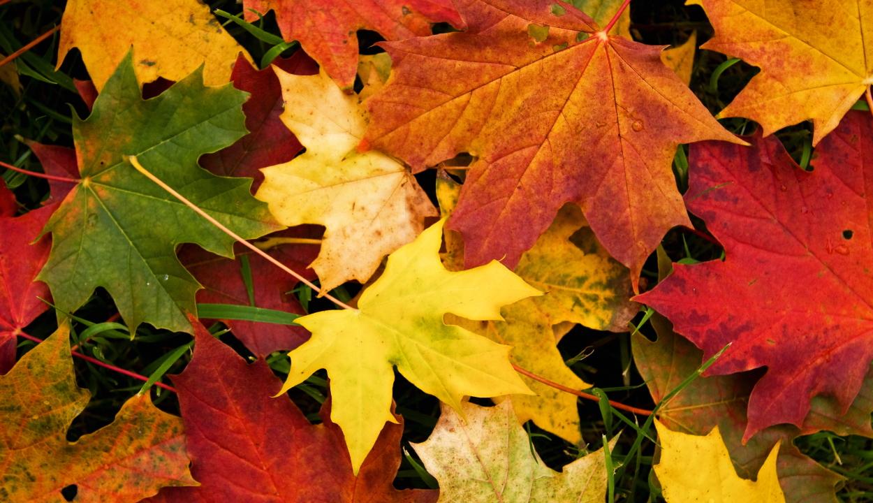 Miért sárgulnak be ősszel a falevelek?
