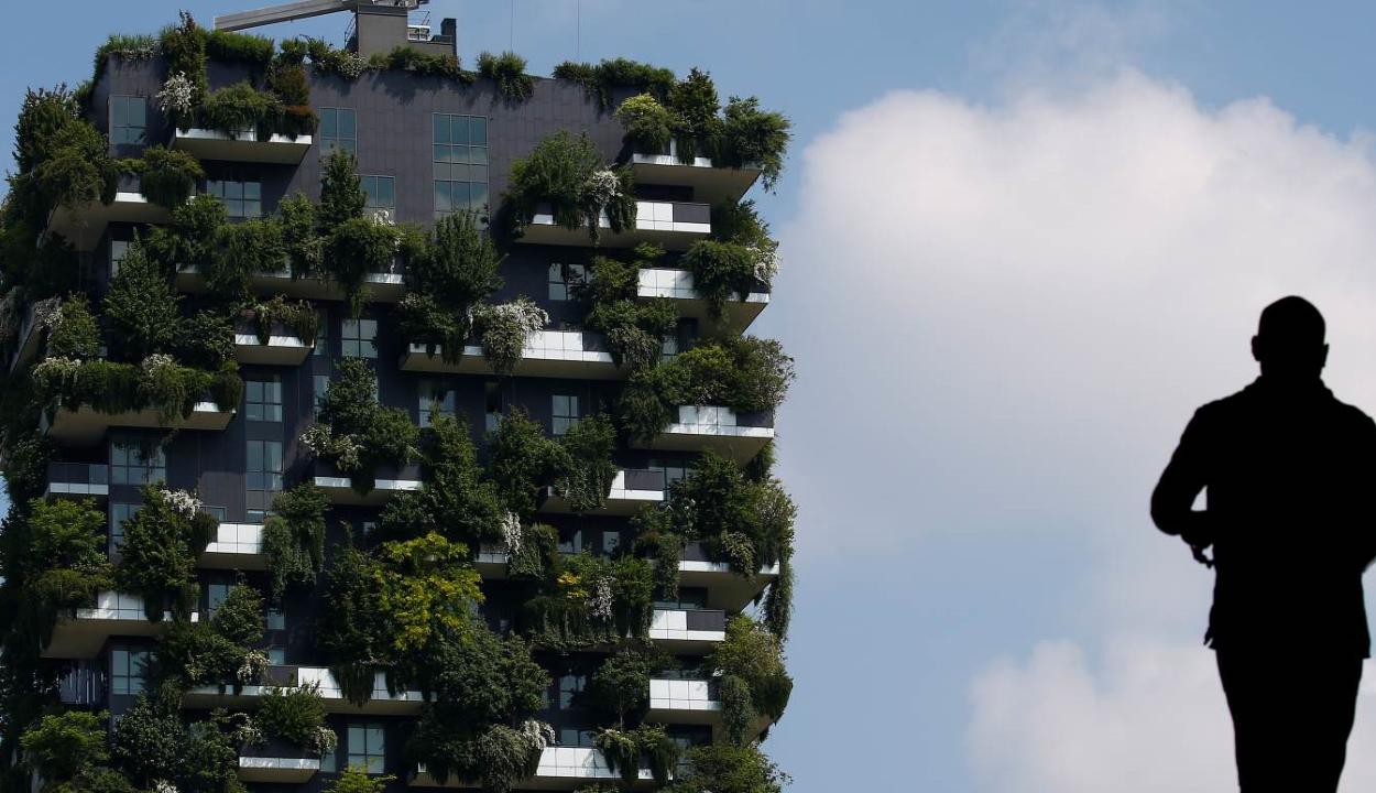 Városi erdőkkel fékezné a klímaváltozást az ENSZ