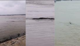"""Kínai """"Loch Ness-i szörnyet"""" láttak a Jangce folyóban"""