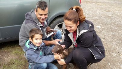 Három kutya talált gazdára
