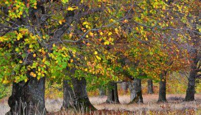 A nagylelkű ősz meséje