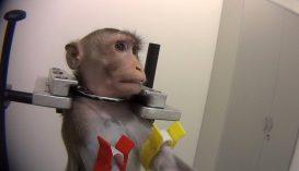 Horrorisztikus videó szivárgott ki egy német kutatólaborban végzett állatkísérletekről