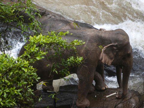 Halálba zuhant hat elefánt, miközben egymáson próbáltak segíteni