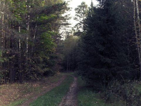 Szolgálati fegyverrel szerelnék fel az erdők őrzését ellátó erdészeket