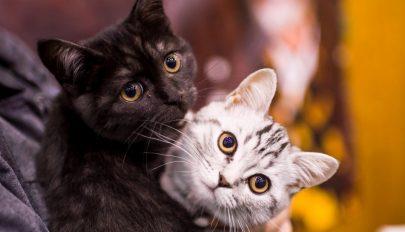 Macskáinak köszönheti megmenekülését egy olasz pár