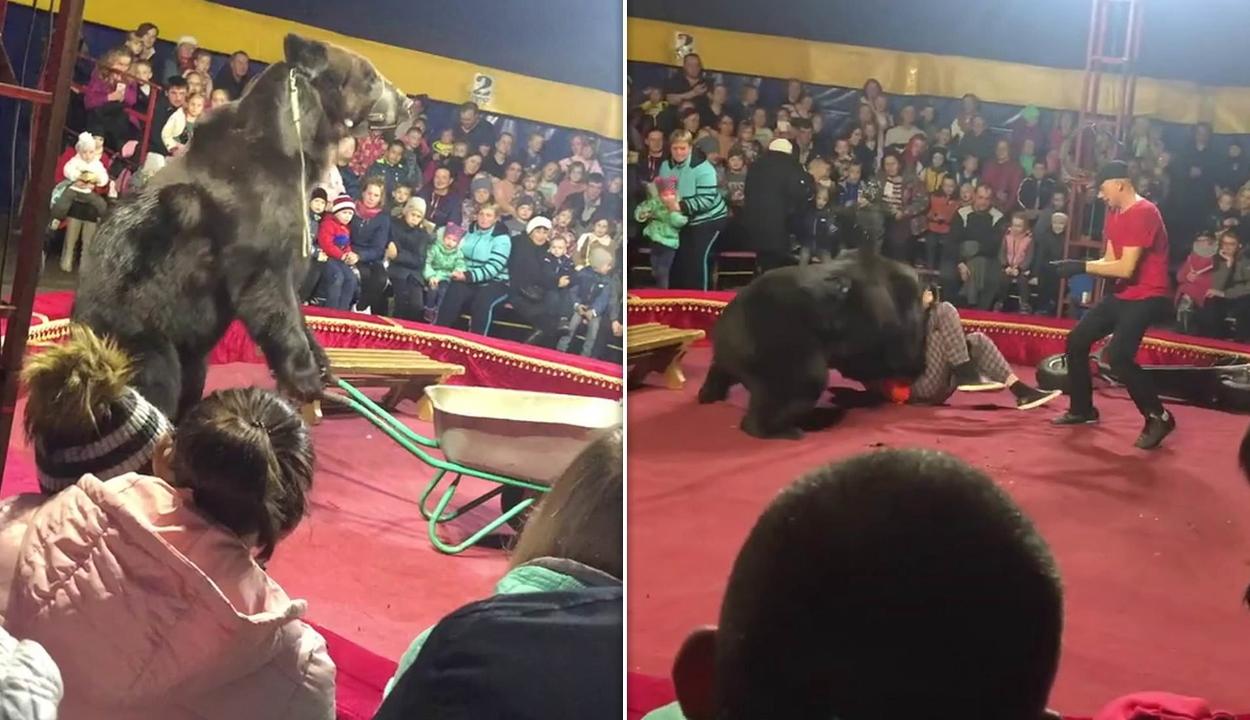 Előadás közben támadt idomárjára egy cirkuszi medve