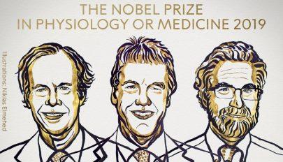 Sejtkutatásért hárman kapják az orvosi Nobel-díjat