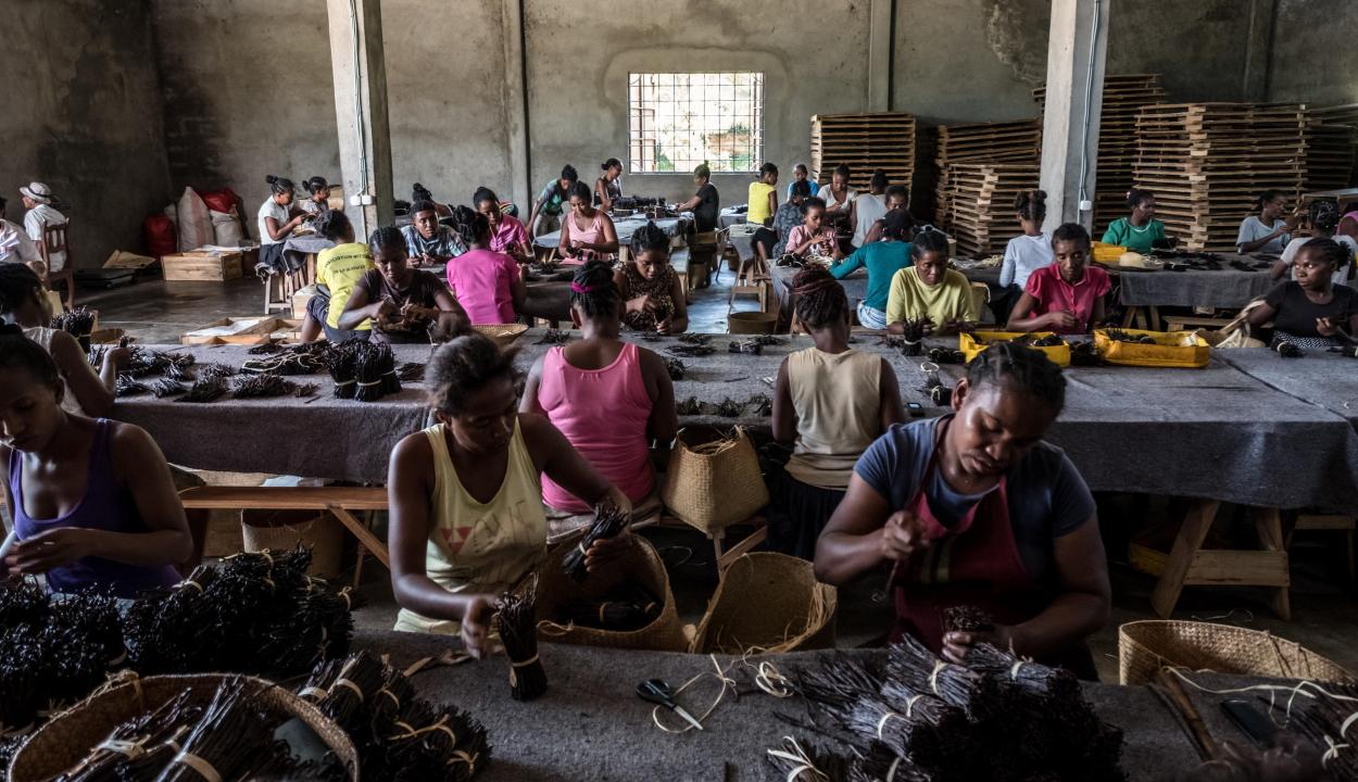 Gyerekeket zárnak börtönbe vanílialopás miatt Madagaszkáron