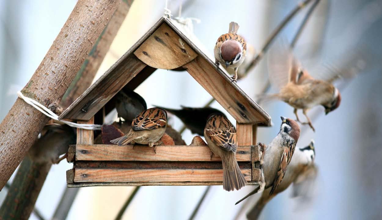 Mozaik –Téli madáretetés