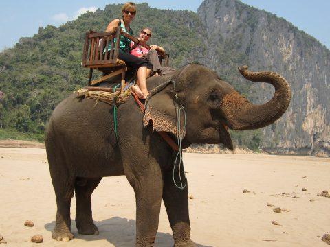 Betiltják az elefántháton való túrázást