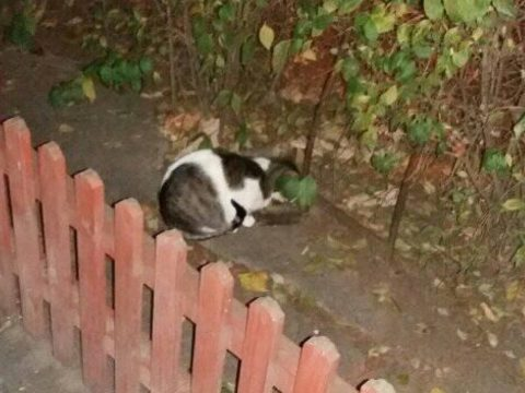 Macskák leptek el egy Szemerja negyedi tömbházat
