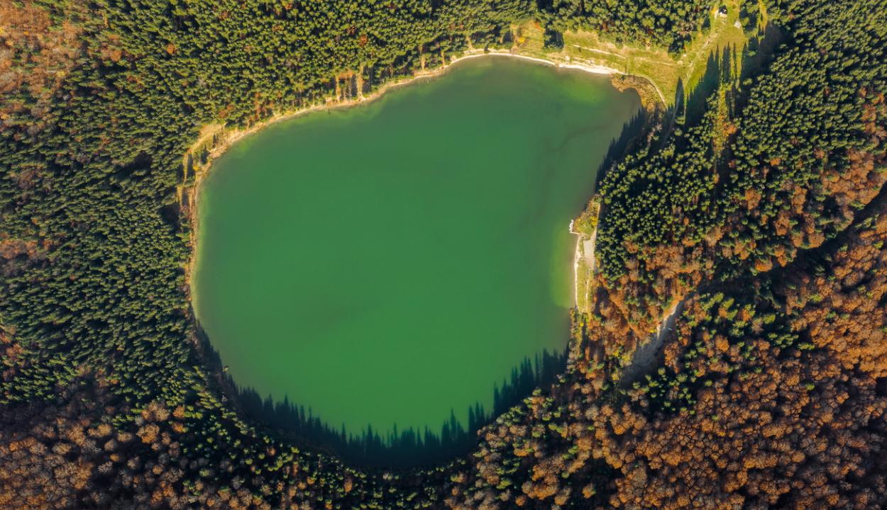 Algásodik a Szent Anna-tó, bajban vannak a fenyvesek, sivatagosodik Temesvár