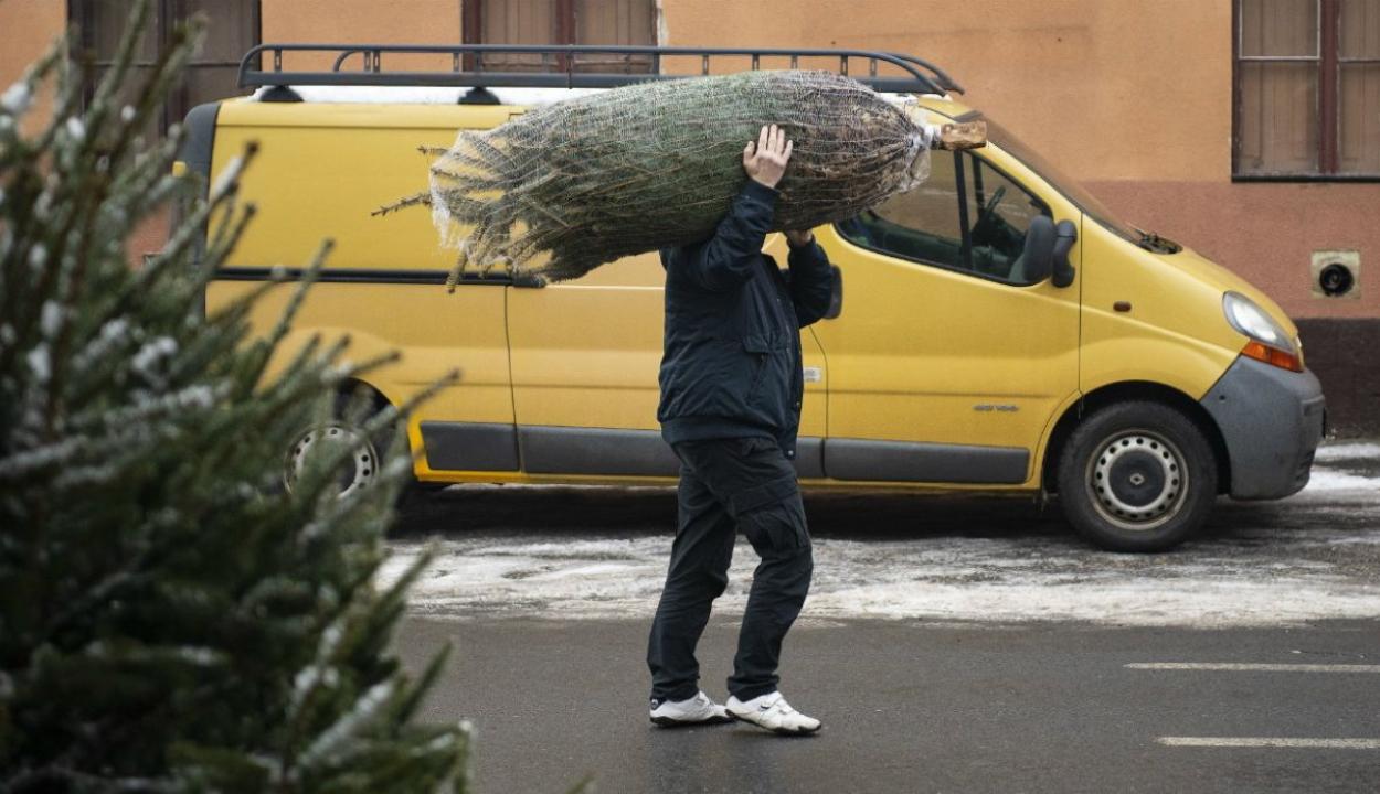 Így érdemes karácsonyfát venni és tárolni