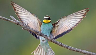 Zsugorodnak a madarak a klímaváltozás miatt