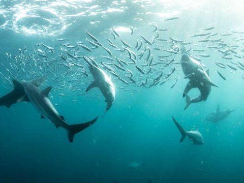 Rendkívül gyorsan fogy az oxigén az óceánokból a felmelegedés miatt