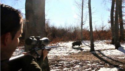 Vaddisznóvadászat a Medvefejben