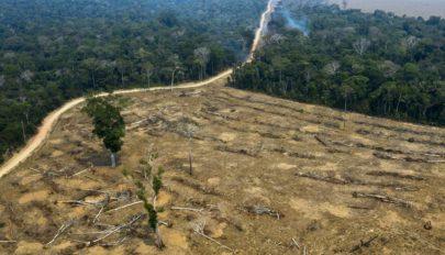 Újra rekordtempóban pusztítják a brazíliai esőerdőket