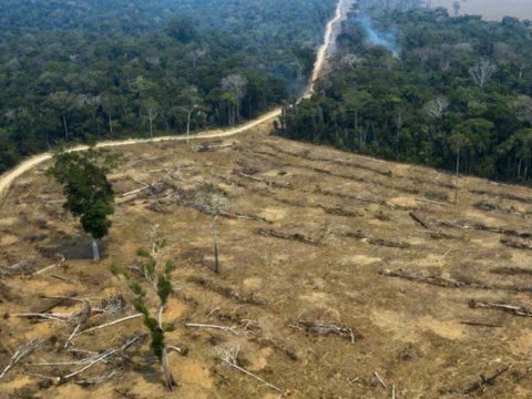 Nyolcvanöt százalékkal nőtt az erdőirtás Amazónia észak-brazíliai részén 2019-ben