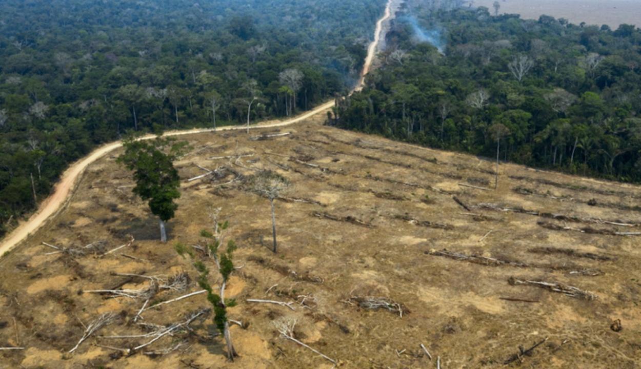 Csaknem 100 millió hektár erdő tűnt el bolygónk felszínéről az elmúlt két évtizedben