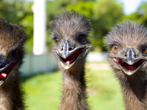 Emukat sétáltató turistákat bírságoltak Velencében