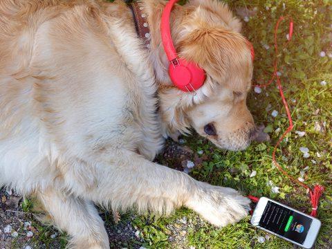 Otthon hagyott kisállatoknak készített lejátszási listákat a Spotify