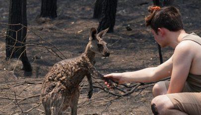 Ausztrál tűzvész: megégett kenguru kért segítséget egy tinitől