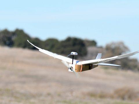 Először fejlesztettek tollakkal szárnyaló robotot