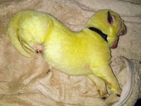 Zöld kölyke született egy kutyának az Egyesült Államokban