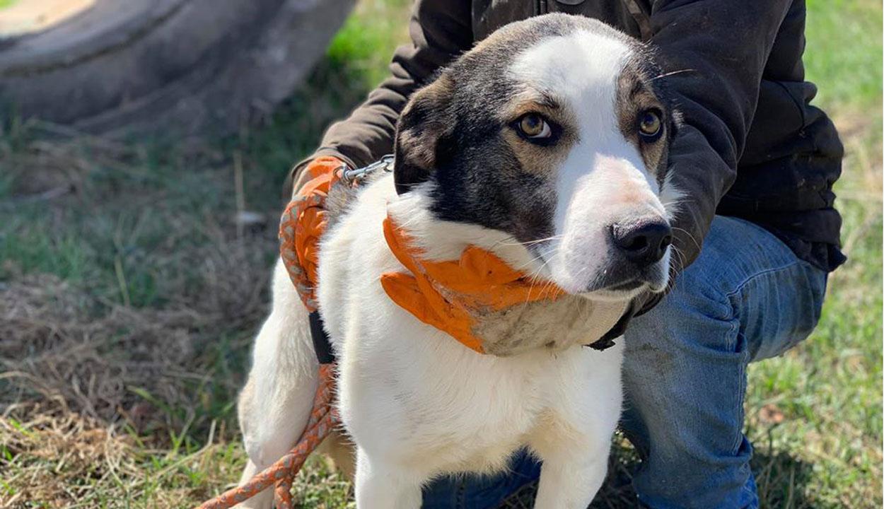 Kutyasétáltatókat várnak a menhelyre