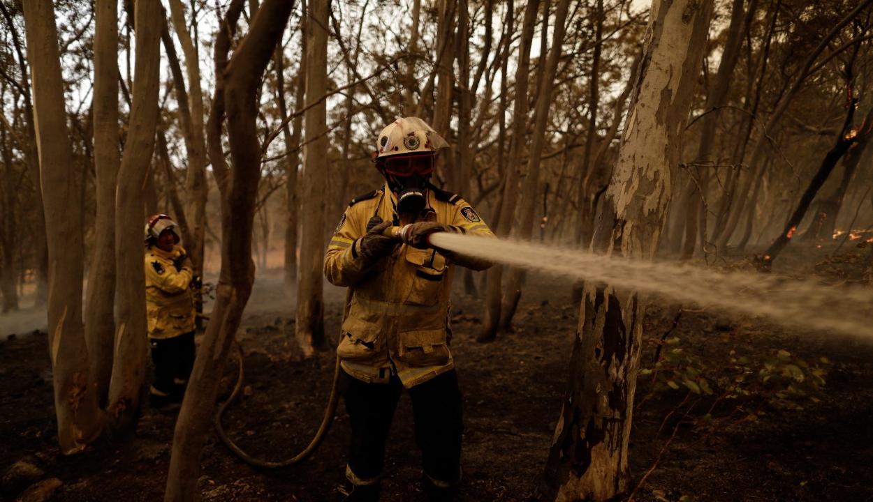 Sikerült megfékezni a tüzeket az ausztráliai Új-Dél-Walesben