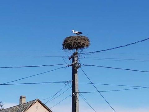 Megérkezett az első gólya Magyarországra