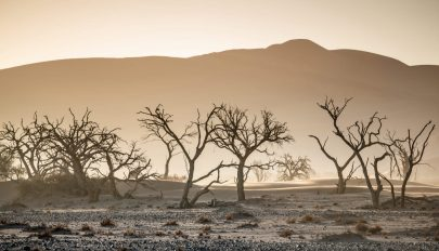 Az állat- és növényfajok egyharmada eltűnhet 50 éven belül