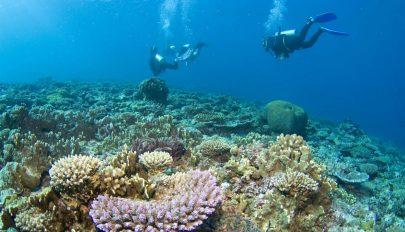 Továbbra is veszélyben a Nagy- Korallzátony