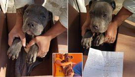 Menhely előtt hagyta kutyáját egy kisfiú, hogy megmentse agresszív apjától