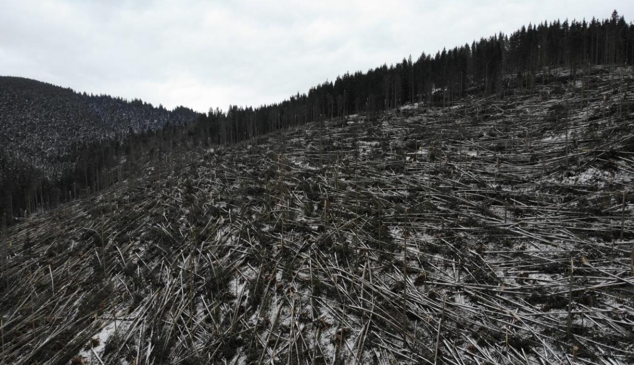 Egymillió köbméternyi fát döntött ki az ítéletidő Hargita és Maros megyében